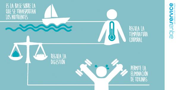 Funciones del agua en el cuerpo humano