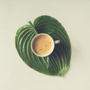cafeteras para casa aquaservice cafe